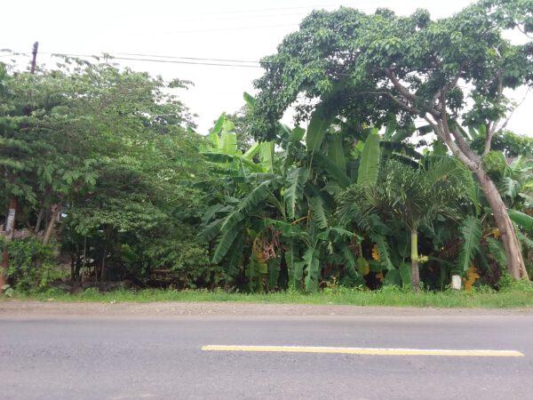 Tanah Murah Cilacap Depan Jalan Raya Wringin Sidareja Gandrung